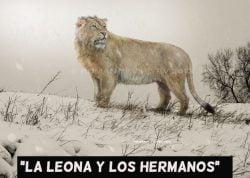 La leona y los hermanos