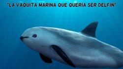 La vaquita marina que quería ser delfín