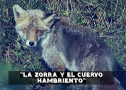 Fábula La Zorra y el Cuervo hambriento